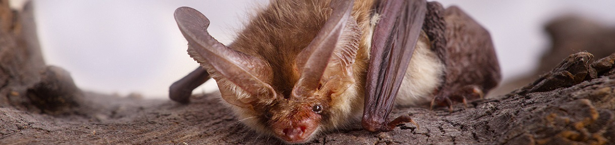va bat removal services